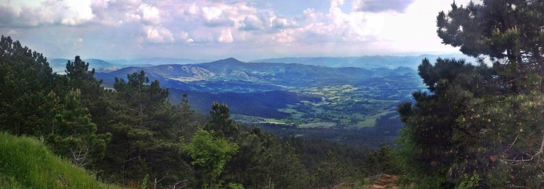 Sve nijanse zelene: travari, gljivari